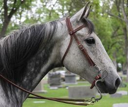 War Horse adaptation from Dreamworks