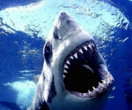3D in cinema? Again? Get ready for Shark Night 3D!