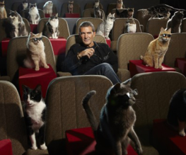 Antonio Banderas hangs out with cats
